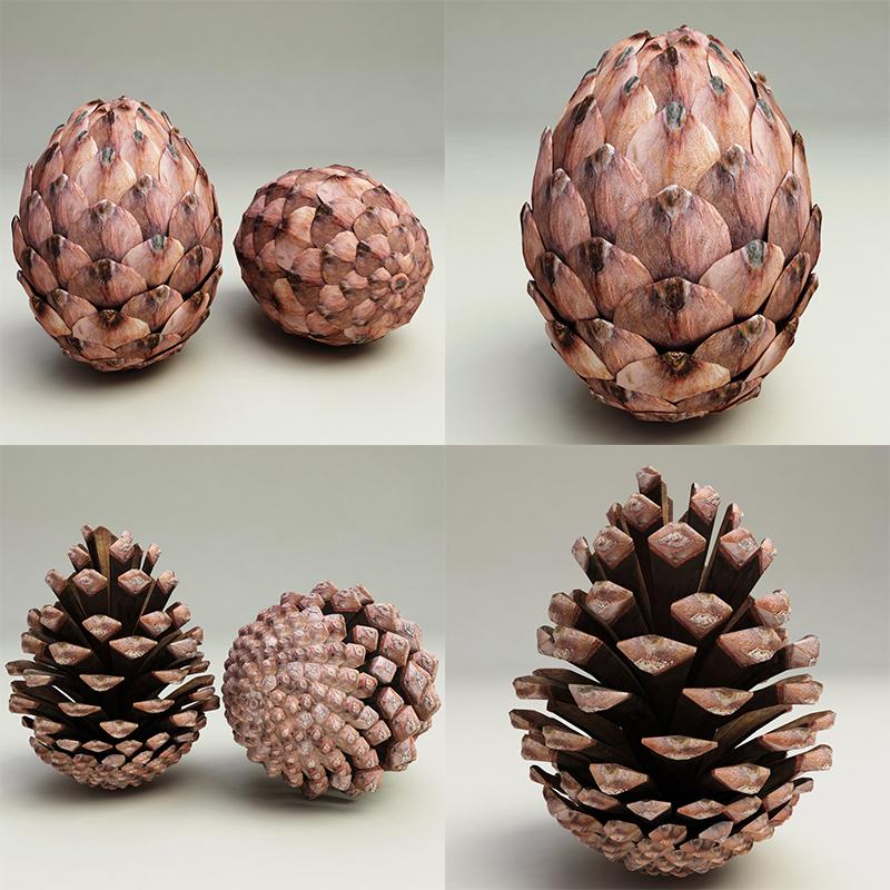 fir-cones 杉木果