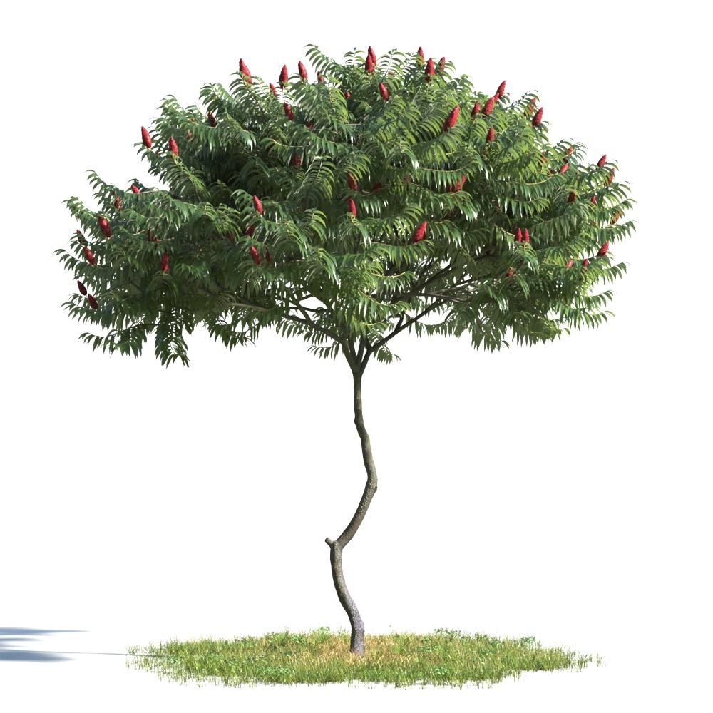 绿色植物合集 各类树木 辣椒树