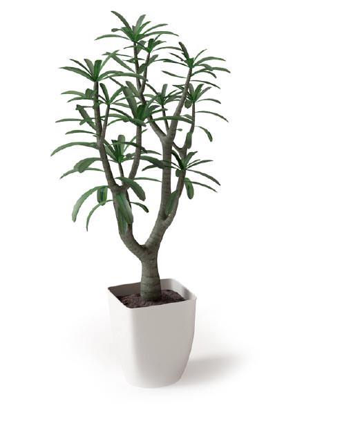 室内植物盆栽系列 小树盆栽