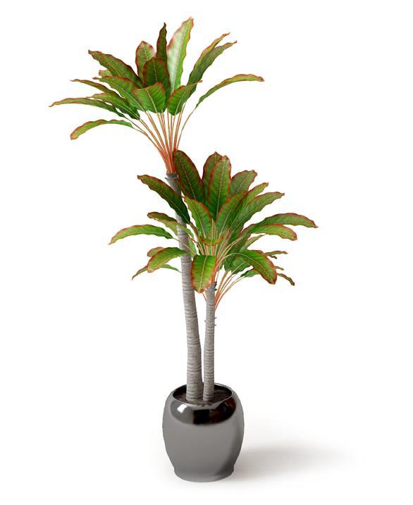 室内植物盆栽系列 观叶盆栽