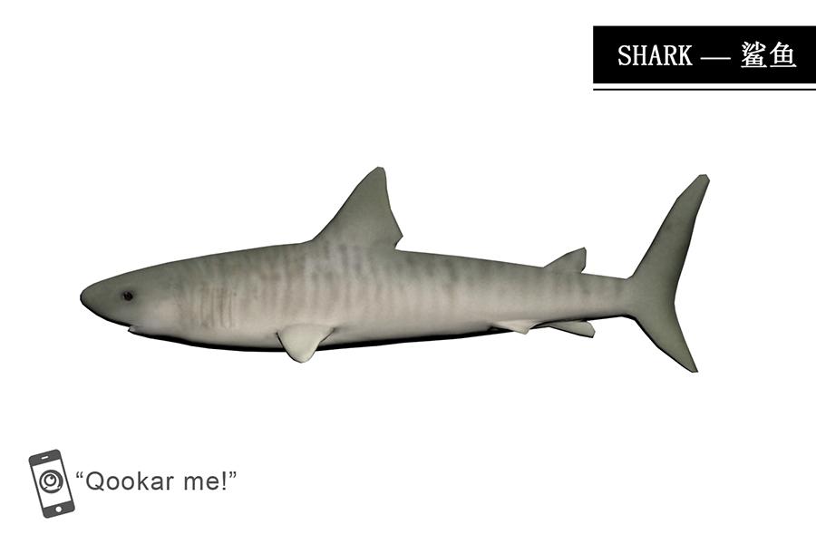 鲨鱼 Shark