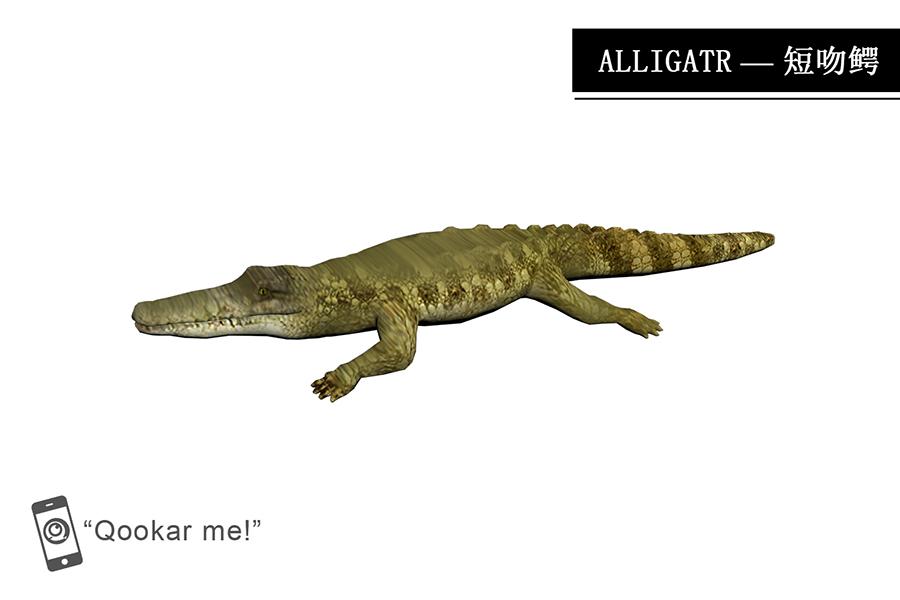 鳄鱼 alligator