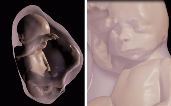 通过VR加3D建模 妈妈们可以看到肚子里的婴儿