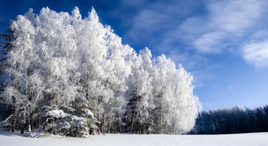 秋天和冬天的树木